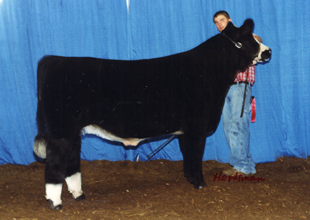Res-Simmental-Steer